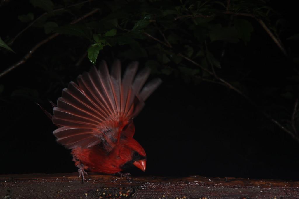 Birds II-214