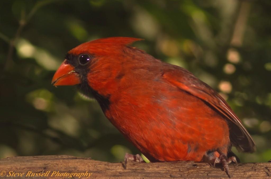 Cardinal com